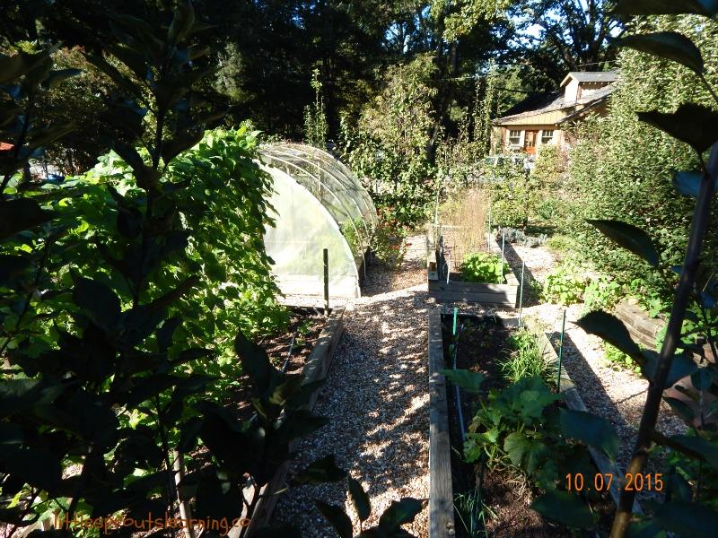 Jodi's garden