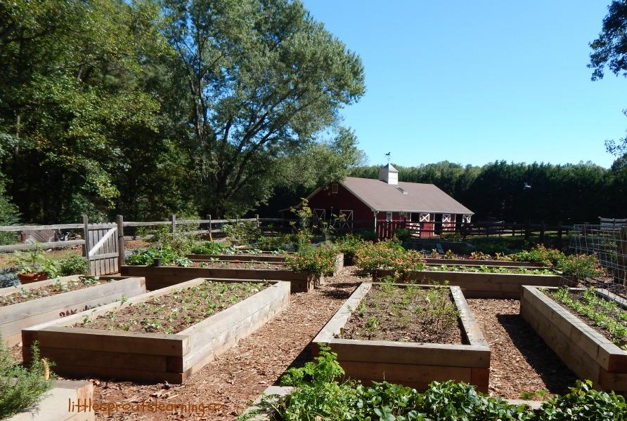 growing a greener world tv show garden tour