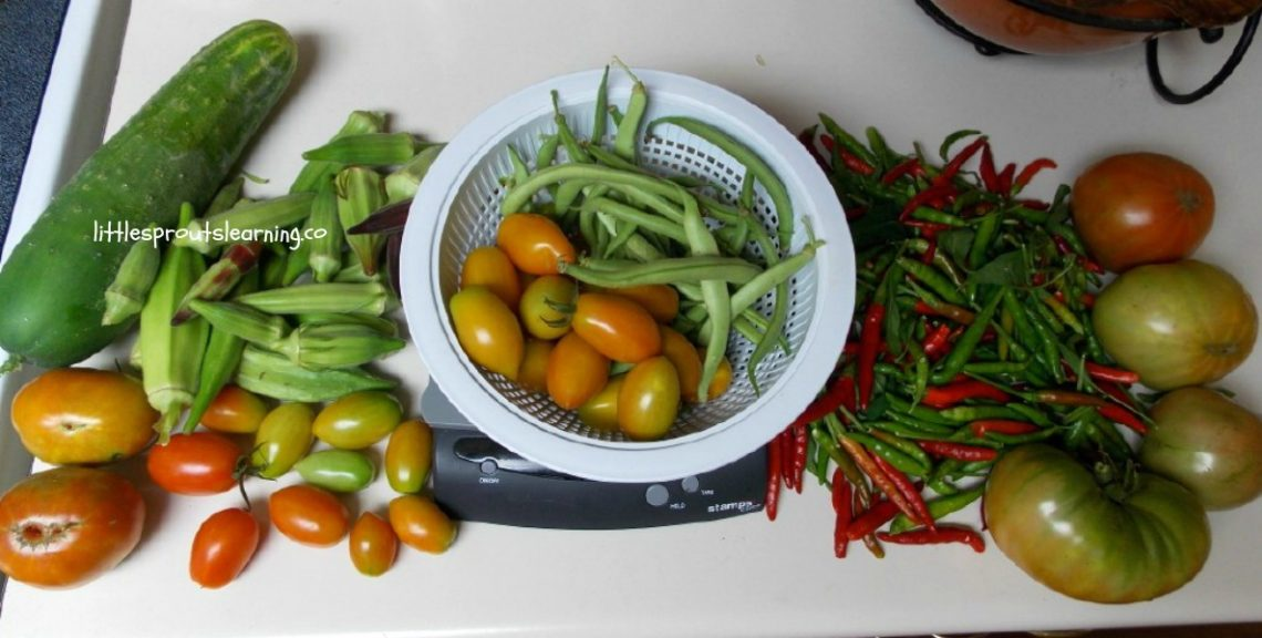 The garden in July is producing a lot and getting out of hand at the same time, so there are plenty of garden chores to do.