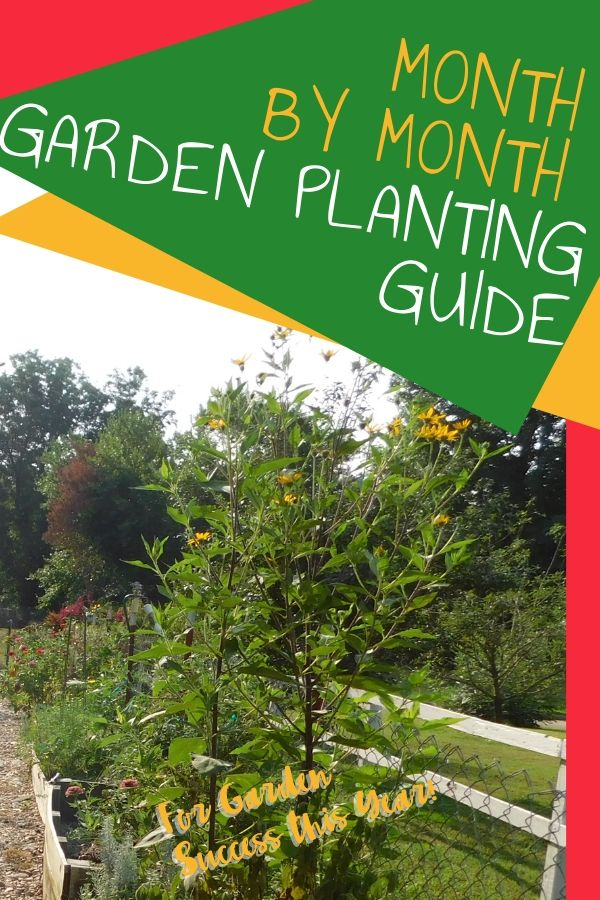 It's hard to keep track of what to plant when in the garden, so check out this zone 7 vegetable garden planting guide to what you grow in the garden when.