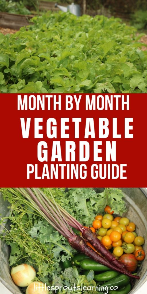 It's hard to keep track of what to plant each month, so here is a vegetable garden planting guide to what you grow when. It will help a lot!