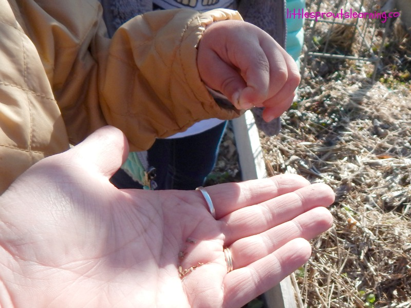 free seeds for cheap or free garden resources. Child taking seeds from adult hand to plant in the garden