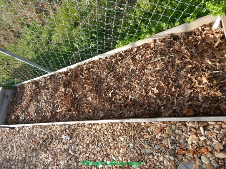 How to Mulch your Garden for Free