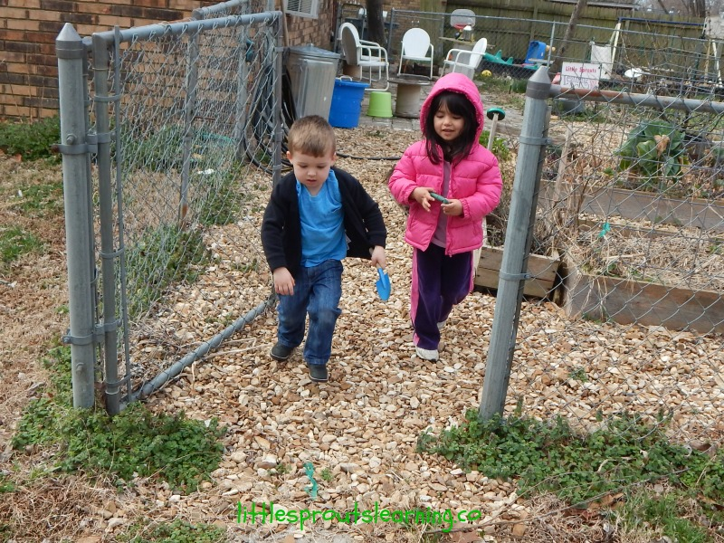 planting kohlrabi with kids