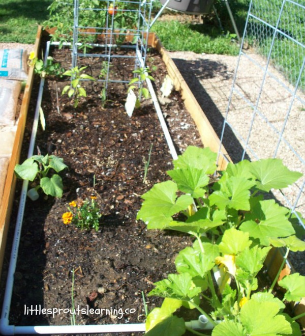 raised bed benefits