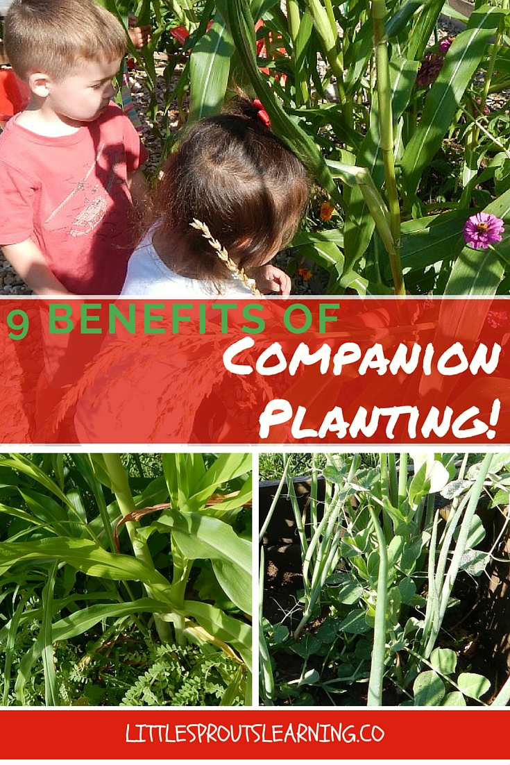 9 Benefits of Companion Planting