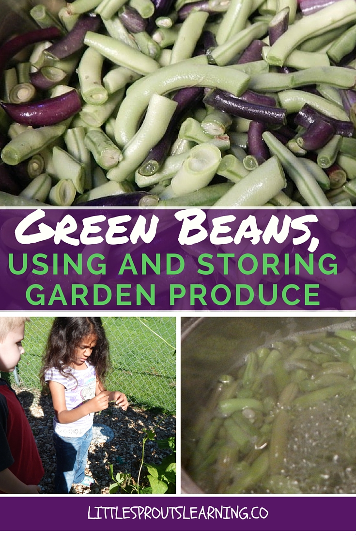 Green Beans, Using and Storing Garden Produce