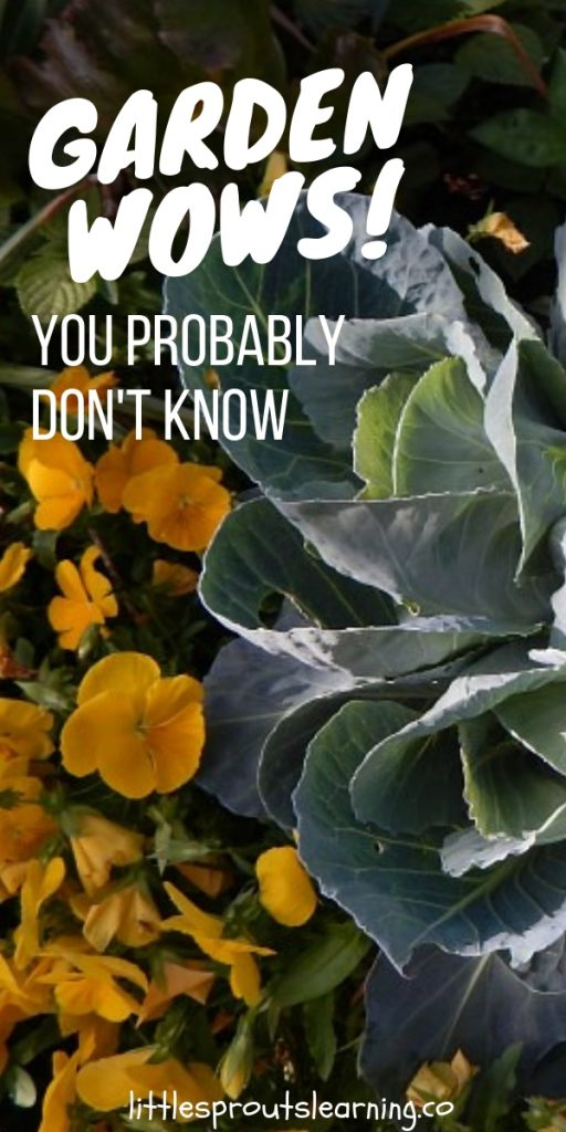 A garden is a glorious place full of mystery and knowledge with so much to learn. I bet you didn't know these garden wows. (or maybe not all of them)