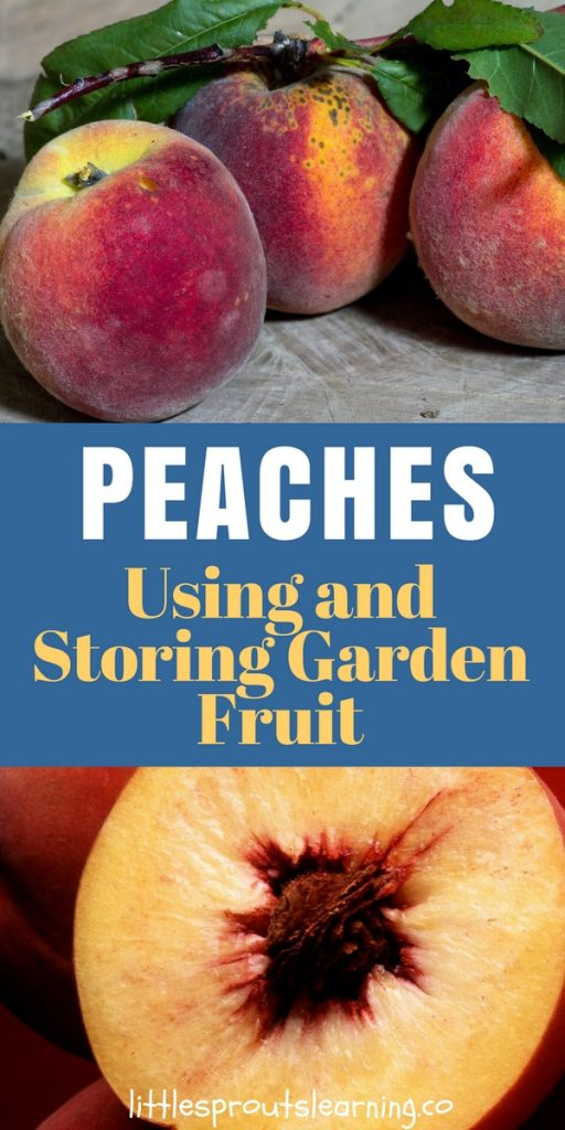 Using and Storing Peaches from the Garden