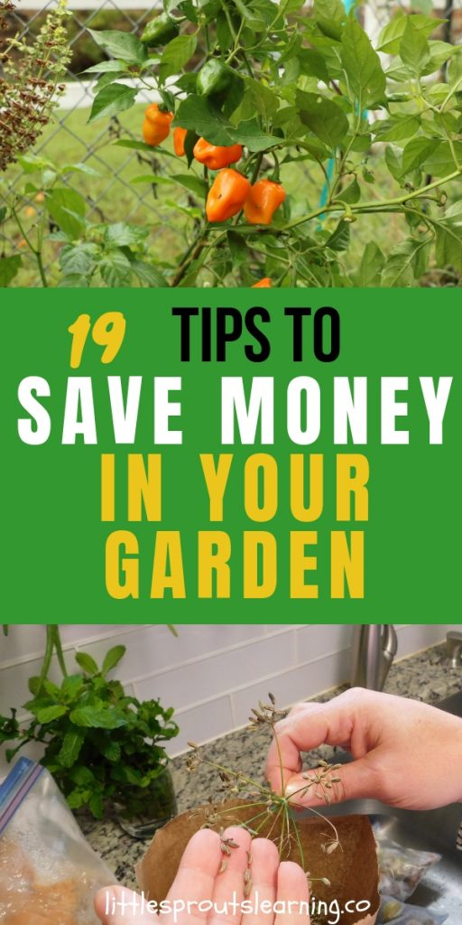 There are lots of great ways to save money in your garden. With some creativity and style, you can garden on the cheap AND get food!