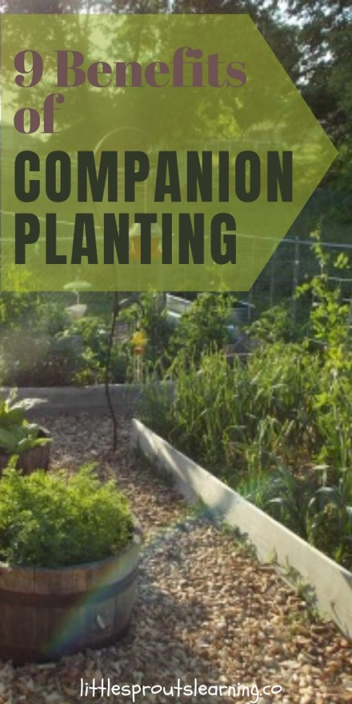 Companion planting is the practice of planting things together that help each other grow. Check out the benefits of companion planting for your garden!