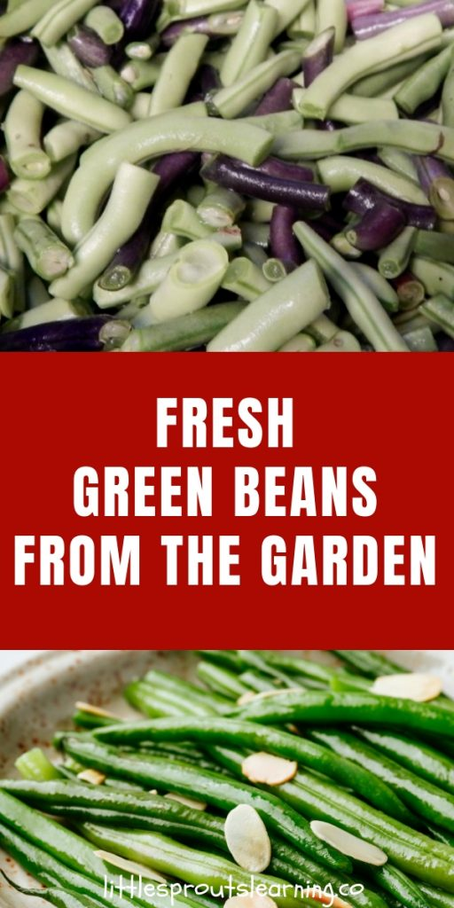 Using and preserving green beans from the garden takes a little creativity to be able to ensure none go to waste.