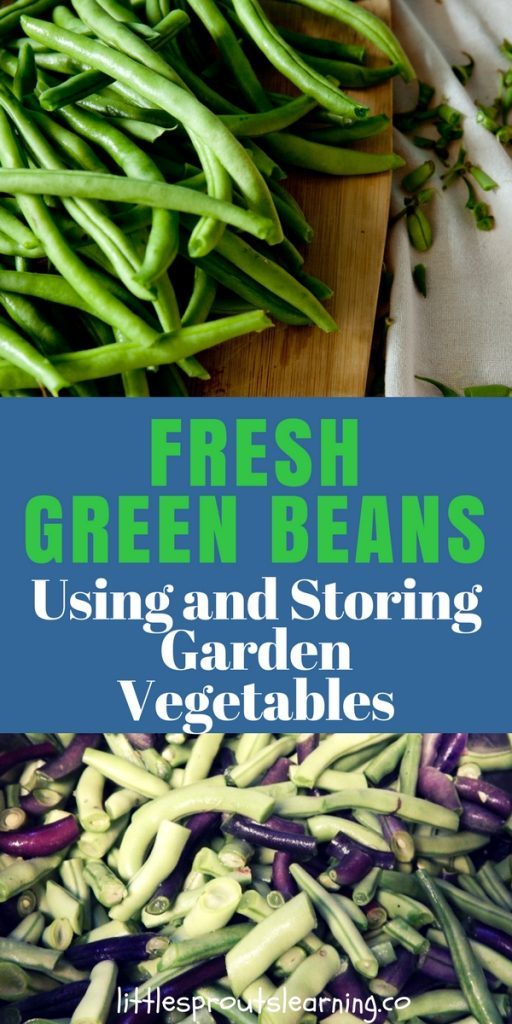 Fresh Green Beans, Using and Storing Garden Vegetables