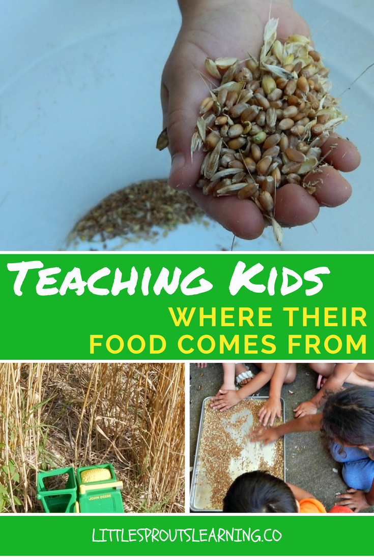 Teaching Kids Where Their Food Comes From