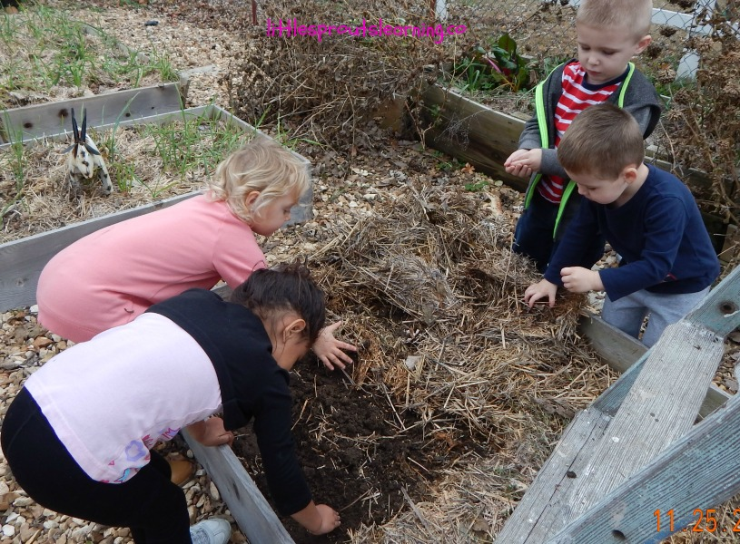 Prepping no til garden beds for spring