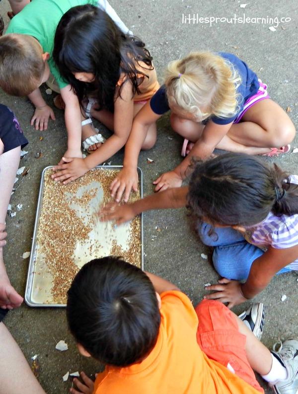 kids winnowing wheat, learning how to grow flour