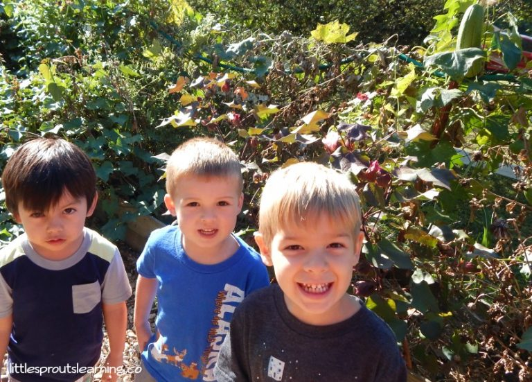 Gardening and Plant Theme for Preschool