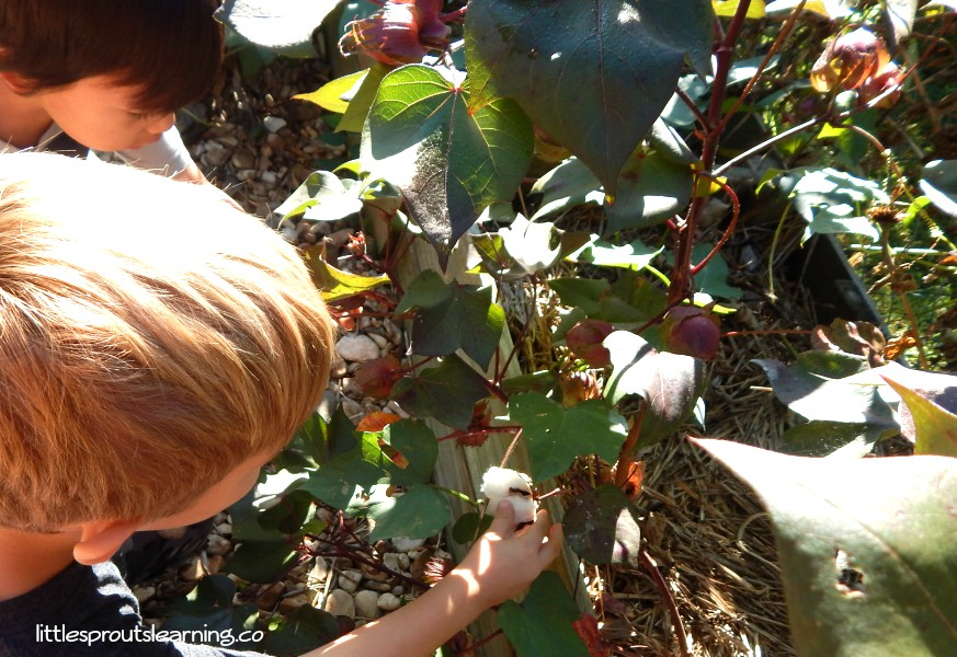 kids-picking-cotton-in-the-childrens-garden