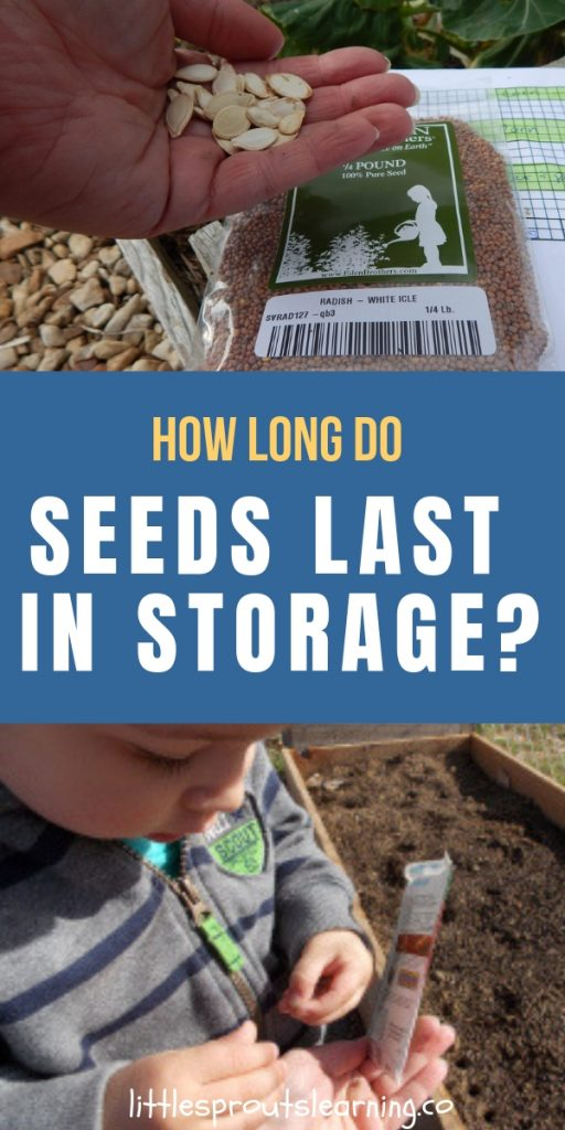 How long do seeds last in storage? It depends on how they are stored and what kind of seeds they are. Some types last one year, some last for many.