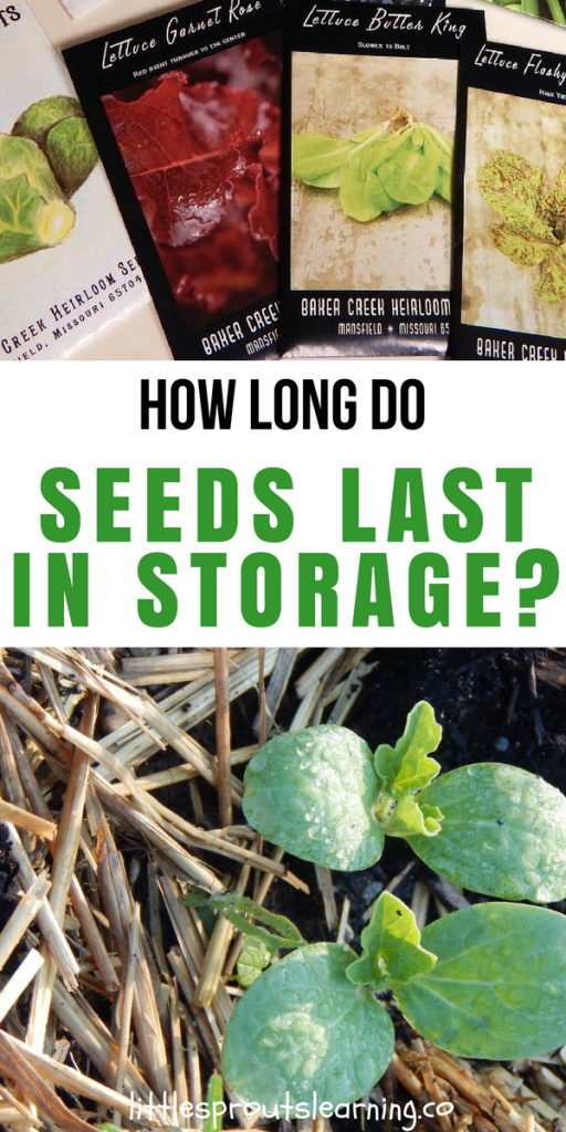 How Long Will Seeds Last in Storage?