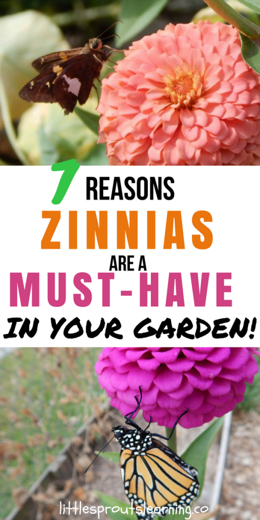 7 Reasons Zinnias are a Must-Have in Your Garden!
