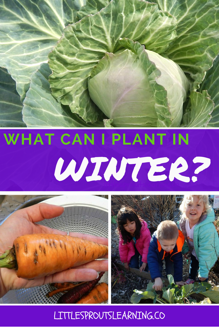 What Can I Plant in Winter? Overcome the winter doldrums by planting some crops in the garden in winter.