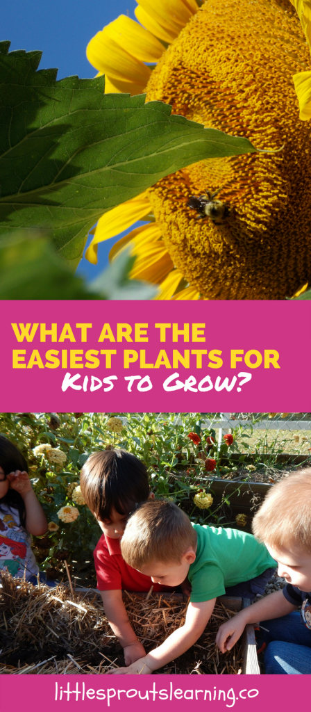 What are the Easiest Plants for Kids to Grow?