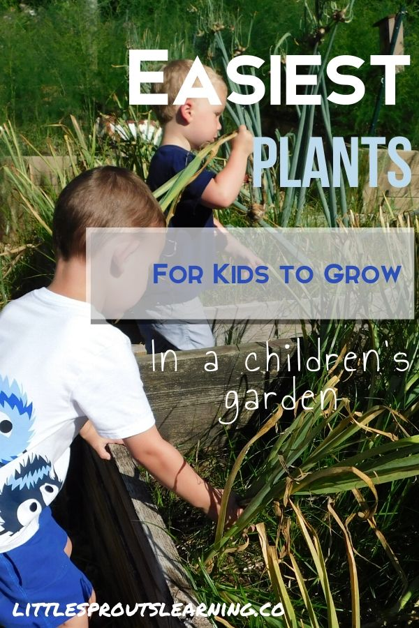 What are the easiest plants for kids to grow? There are a few things that grow fast or are foolproof for the children's garden (and yours).