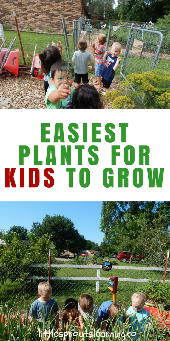 a88a1f0a41 What are the Easiest Plants for Kids to Grow in the Children s Garden