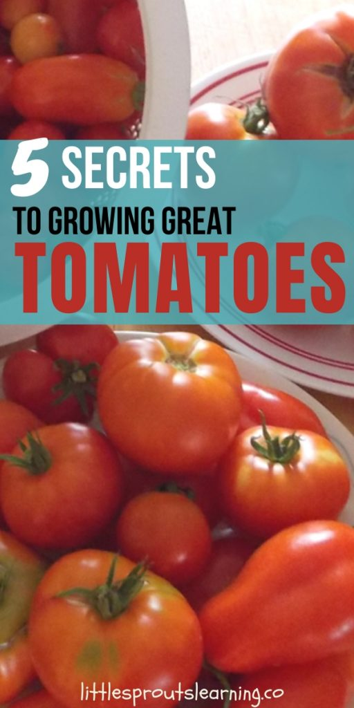 Growing great tomatoes in your home vegetable garden is an art, they can be finicky. Check out these five secrets to growing great tomatoes.