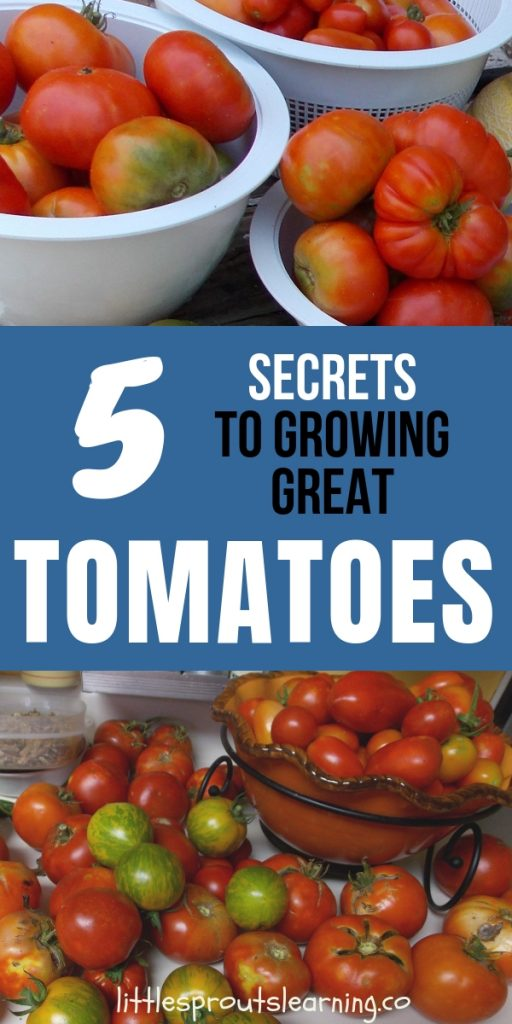Growing great tomatoes in your home vegetable garden is a passion and an art. It's not hard to learn. Check out five secrets to growing great tomatoes.