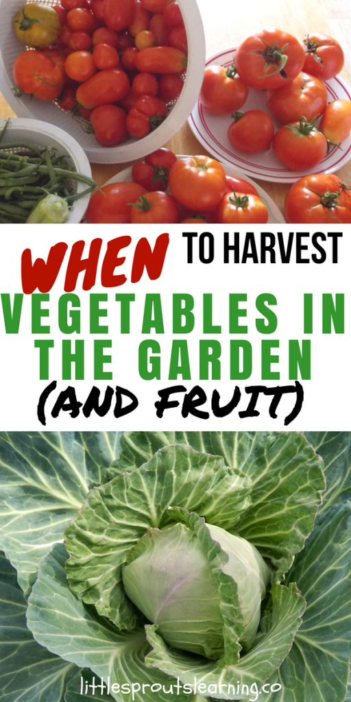 When to Harvest Vegetables in the Garden (And Fruit)
