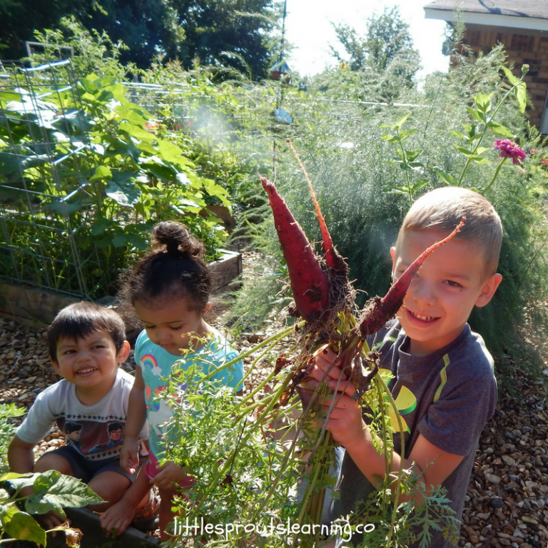 Preschool Children's Garden-Sensory Benefits of Gardening with Kids