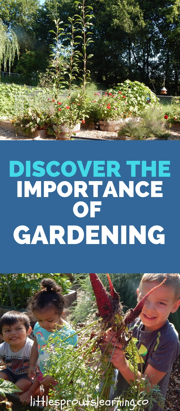 Enjoy Gardening Without The Breaking Your Back With This: Discover The Importance Of Gardening