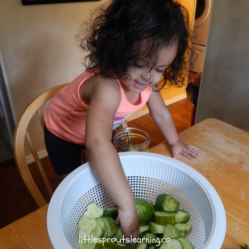 child placing sliced cucumbers in jars to make refrigerator dill pickles. Kid friendly vegetables