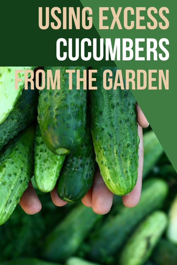 When the garden decides to put out cucumbers, it REALLY decides to put them out. You can end up with a ton of excess cucumbers and that can get overwhelming. Are you wondering what to do with excess cucumbers? In a few weeks, there won't be any available and you'll be missing them like crazy. Check out some things you can do to get the most of them while they're here.