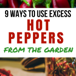 9 Ways to Use Excess Hot Peppers from the Garden