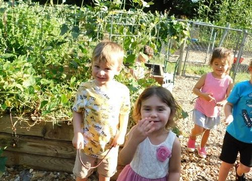 Starting a school garden can be such a game-changer for children's education, but where does the funding come from? Check out these grants for school gardens to see if your program is eligible.