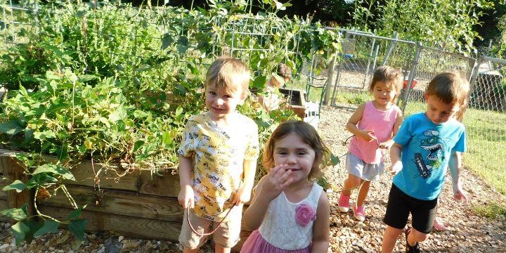 Grants for School Gardens