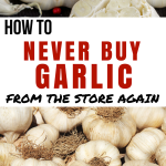 How to Never Buy Garlic from the Store Again