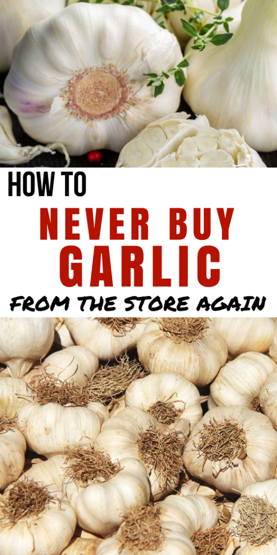 How To Grow Your Own Garlic For The Whole Year