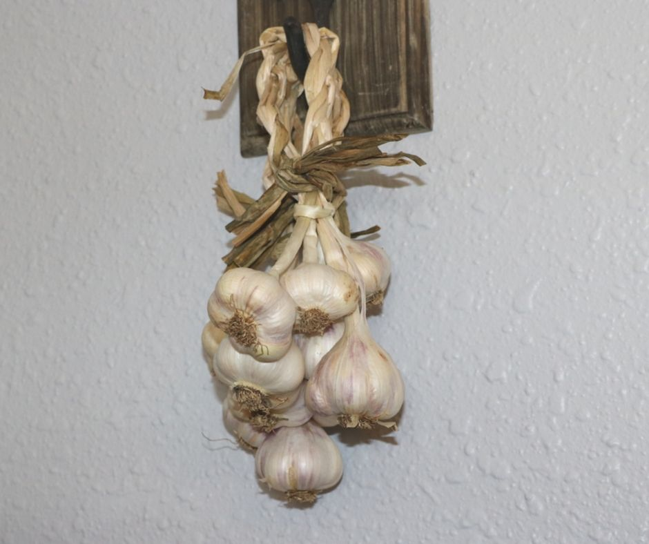Garlic braid hanging