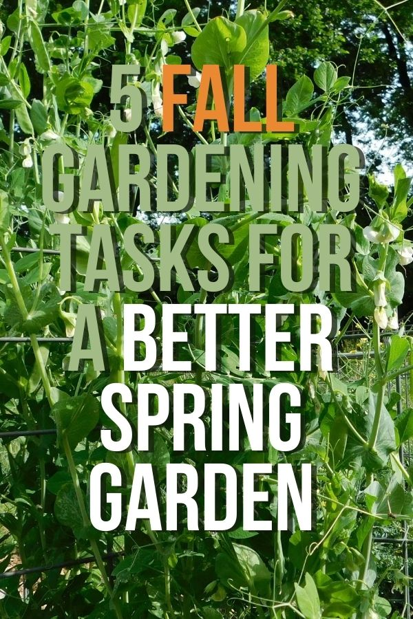 The year before last we were super lazy about our fall gardening tasks and last year ended up being one of our worst garden years ever. Everything that happens in the garden teaches us. This helped me learn that fall garden tasks are some of the most important tasks for garden success.