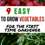 9 Easy to Grow Vegetables for the First Time Gardener