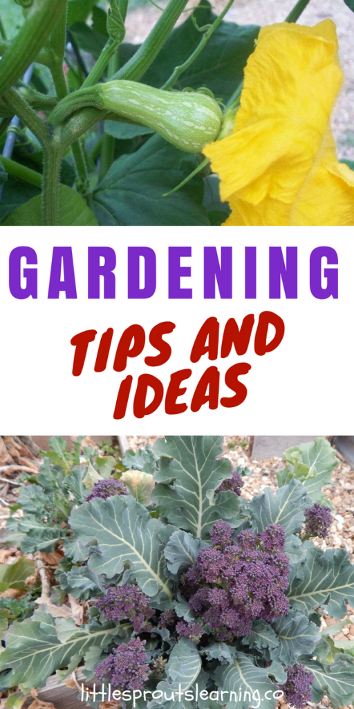 Gardening Tips and Ideas