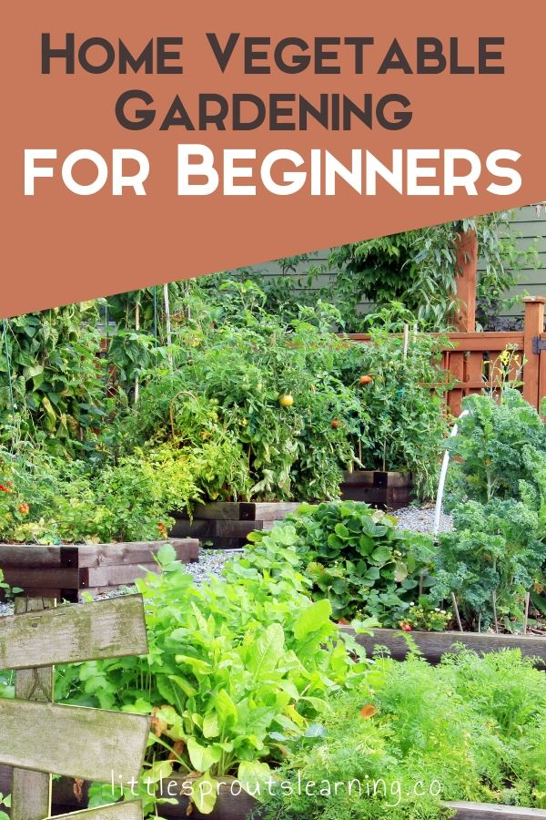 Gardening for beginners at home doesn't have to be complicated. The best part of growing your own food is knowing where that food comes from.