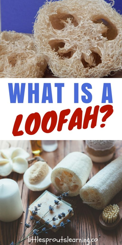 What is a Loofah?