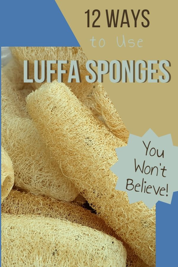 Find out how to grow luffa, where to buy them and all the things they're good for. Use luffa sponge for the body, home, and they're even edible!