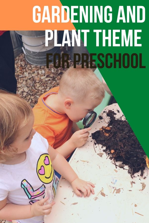Teaching a plant theme for preschool is a great way to teach kids lots of science as well as give them sensory experiences. Kids love to watch things grow.