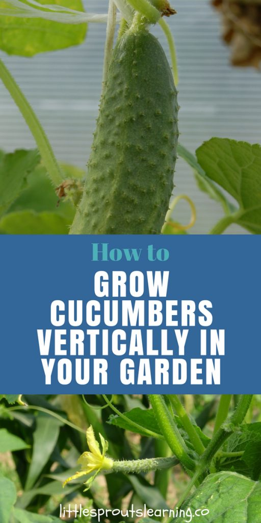 How to Grow Cucumbers Vertically in Your Garden
